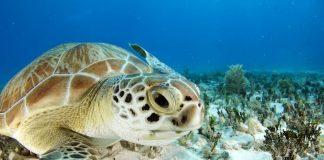 Semana Estatal de la Tortuga Marina