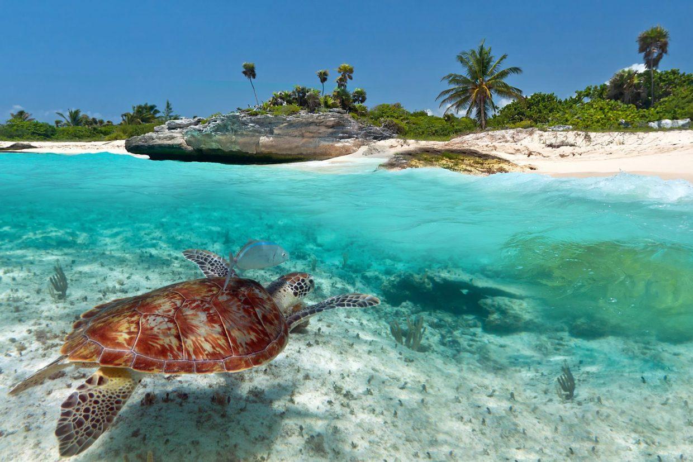 Tortuga marina Riviera Maya