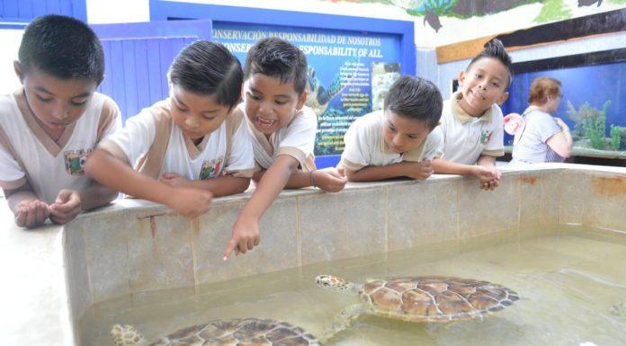 Se finaliza la temporada de cuidado de tortugas en la isla y niños disfrutan de diferentes especies marinas