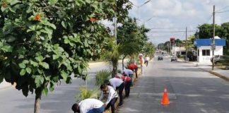Funcionarios y colaboradores reforestan isla mujeres