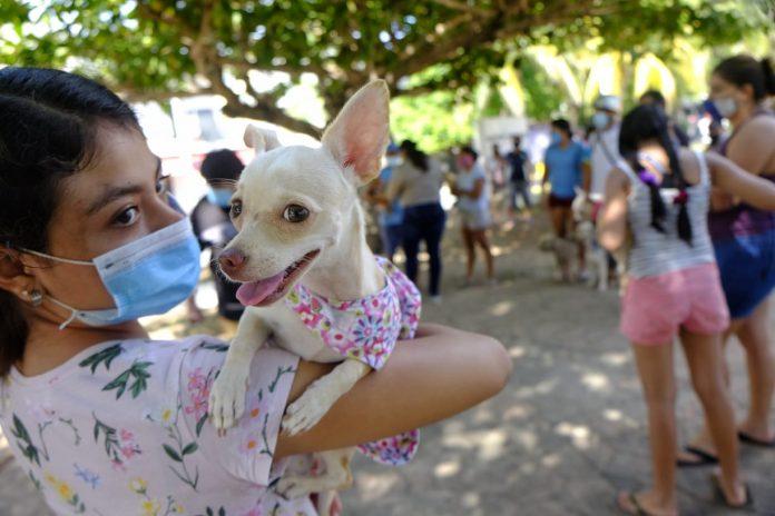 En Isla Mujeres se mantendrá la campaña de vacunación gratuita para mascotas